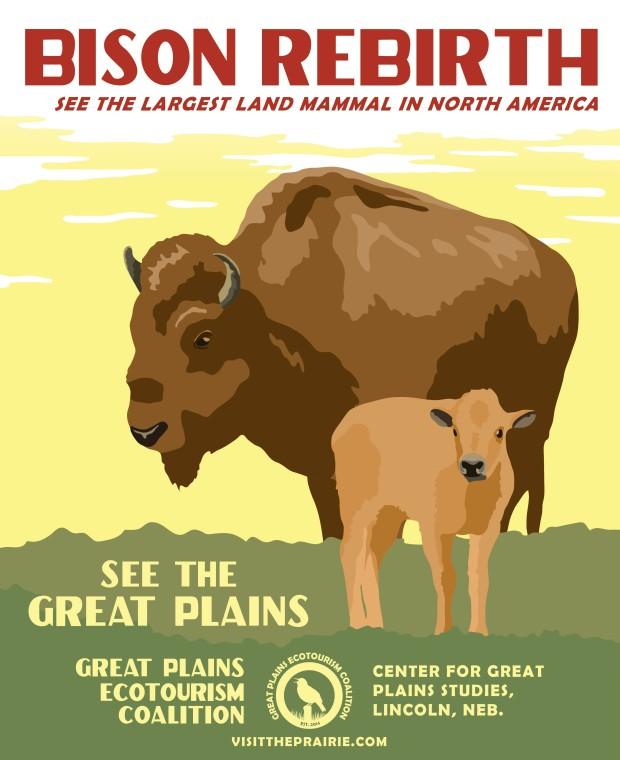 Bison Rebirth